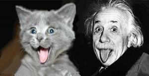 Einsteins_Alberts